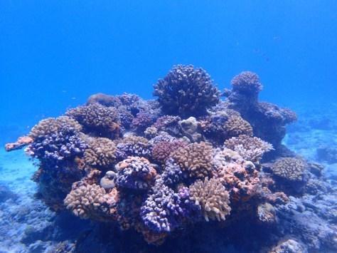 7月2日最高水納島と激混み青の洞窟_c0070933_23523383.jpg