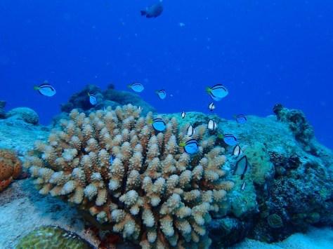 7月2日最高水納島と激混み青の洞窟_c0070933_23543531.jpg