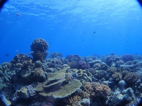 7月2日最高水納島と激混み青の洞窟_c0070933_23553999.jpg