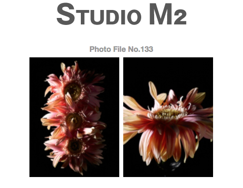 STUDIO M2 Photo File No.133 「花あそび その 2」_a0002672_1265520.jpg