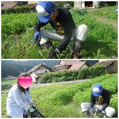 半日農作業_a0199979_2002262.jpg