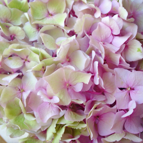 本日のインスタグラムより 紫陽花の季節 東京目黒不動前フラワースタジオフローラフローラ*ウェディングブーケ装花&フラワースクール_a0115684_14040205.jpg