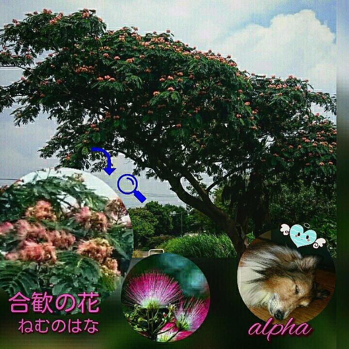 c0189388_08155330.jpg