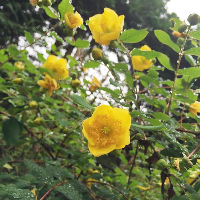 雨上がりのお散歩_b0029997_20100417.jpg