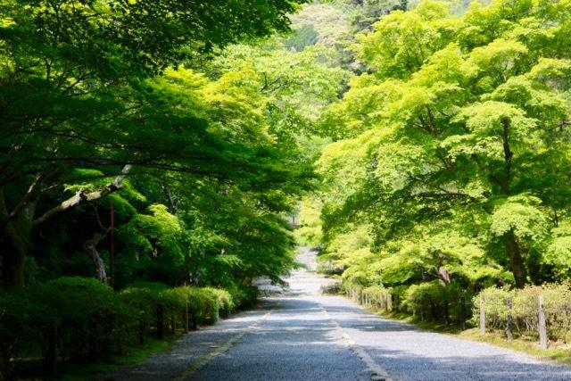 【二尊院】京都旅行 - 14 -_f0348831_19054409.jpg