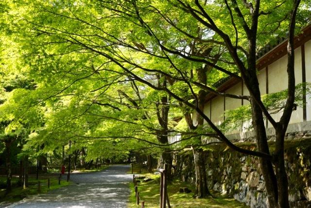 【二尊院】京都旅行 - 14 -_f0348831_19054438.jpg