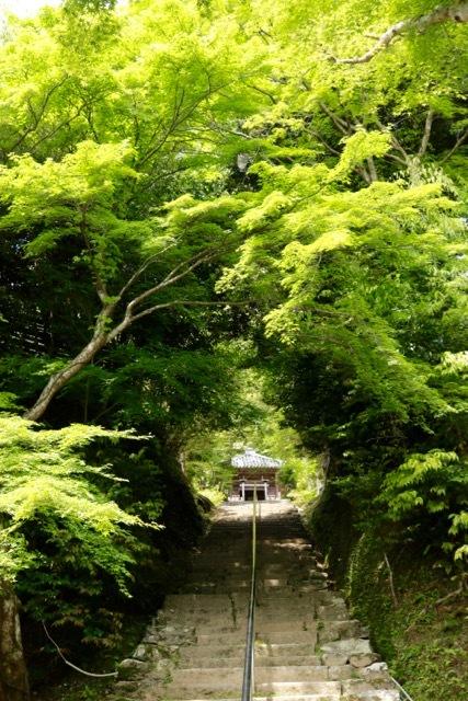 【二尊院】京都旅行 - 14 -_f0348831_19054440.jpg