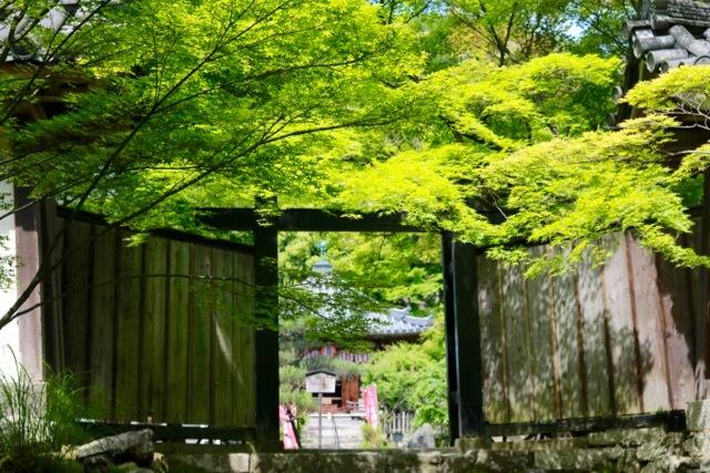 【二尊院】京都旅行 - 14 -_f0348831_19054456.jpg