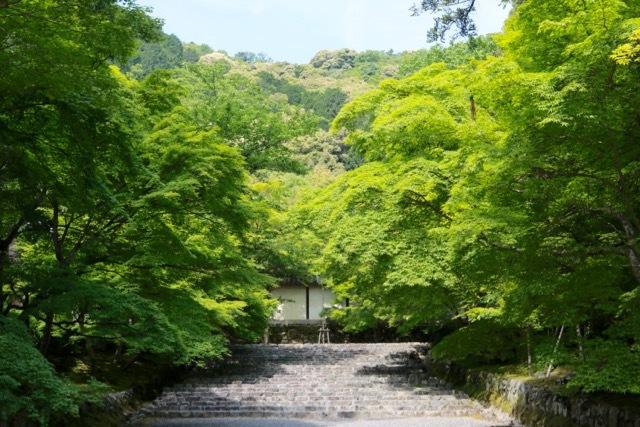 【二尊院】京都旅行 - 14 -_f0348831_19054495.jpg