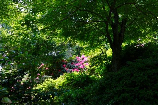 【天龍寺】京都旅行 - 16 -_f0348831_21175029.jpg