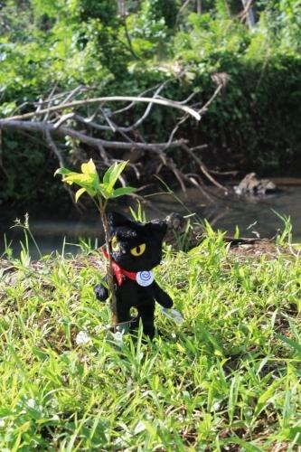 のら猫クロッチ、フィジーに行く!_f0193056_14015778.jpg