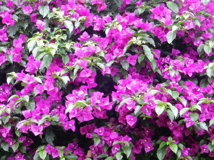 '16,7,3(日)木の次は花でしょ!_f0060461_9121938.jpg