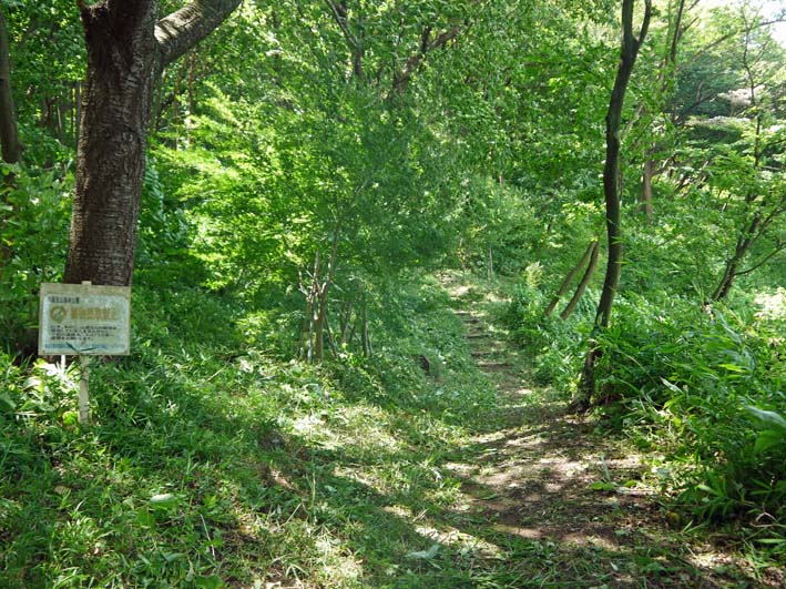 イロハモミジの下草刈りで成長の証確認:六国見山臨時手入れ_c0014967_14551632.jpg