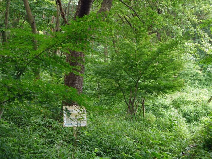 イロハモミジの下草刈りで成長の証確認:六国見山臨時手入れ_c0014967_14553394.jpg