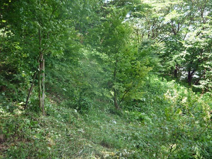 イロハモミジの下草刈りで成長の証確認:六国見山臨時手入れ_c0014967_14562058.jpg