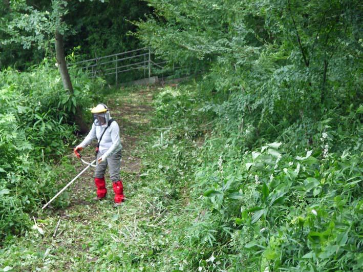 イロハモミジの下草刈りで成長の証確認:六国見山臨時手入れ_c0014967_1456688.jpg