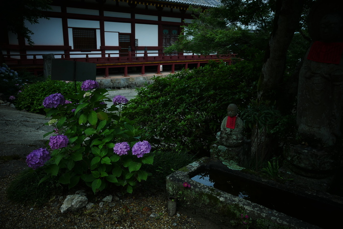紫陽花 2016 矢田寺_f0021869_1927449.jpg