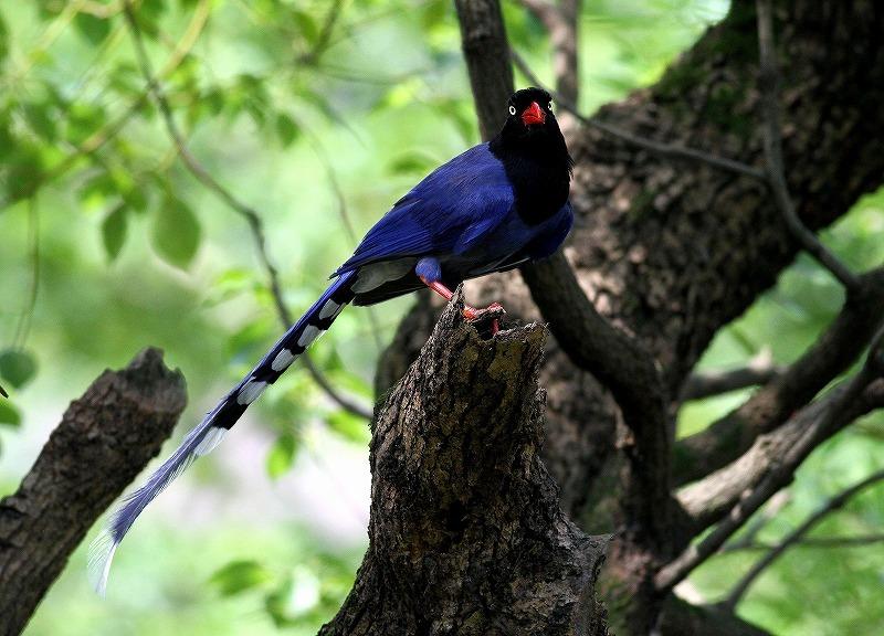 台湾鳥見旅行(その9)・・・_c0213607_19164207.jpg