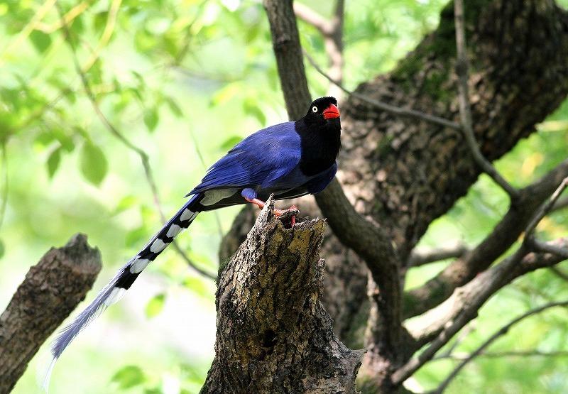 台湾鳥見旅行(その9)・・・_c0213607_19164639.jpg