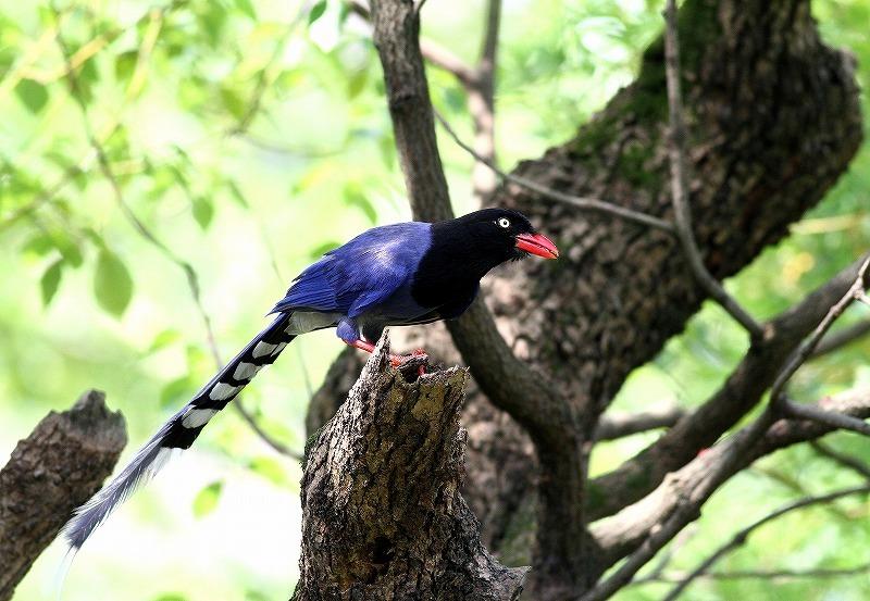 台湾鳥見旅行(その9)・・・_c0213607_19165068.jpg