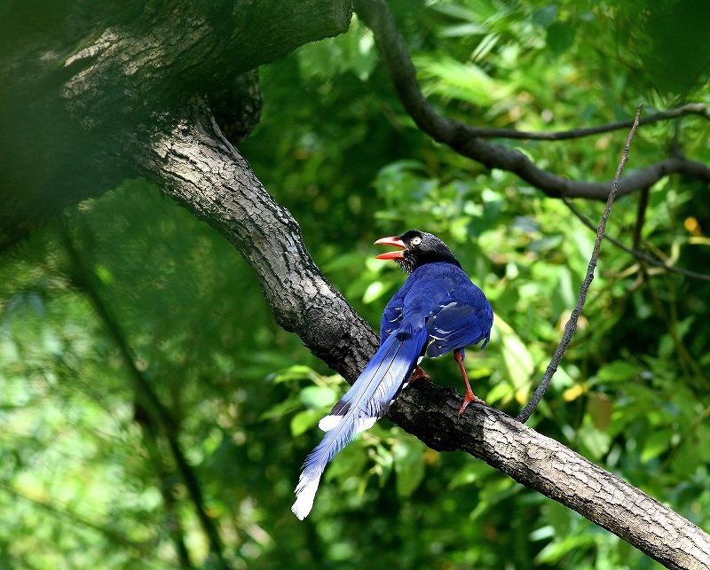 台湾鳥見旅行(その9)・・・_c0213607_19165447.jpg