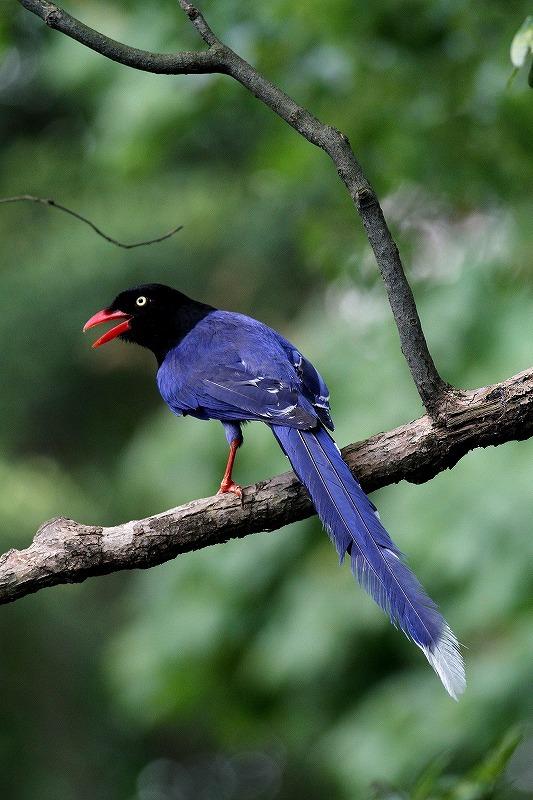 台湾鳥見旅行(その9)・・・_c0213607_19172901.jpg