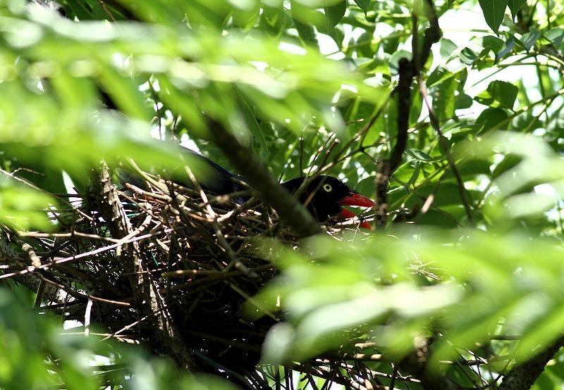 台湾鳥見旅行(その9)・・・_c0213607_19173532.jpg