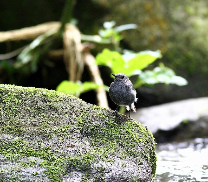 台湾鳥見旅行(その9)・・・_c0213607_19223110.jpg