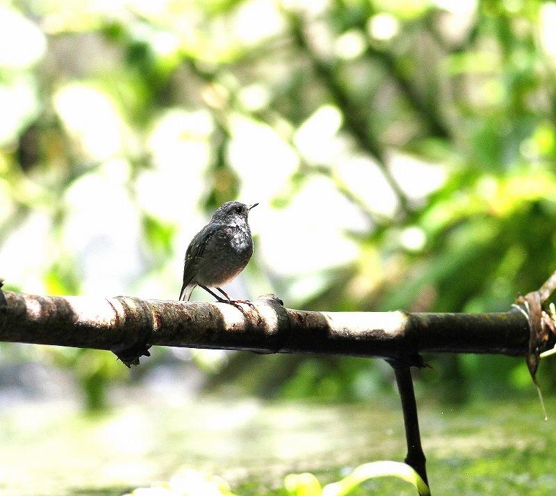台湾鳥見旅行(その9)・・・_c0213607_19223804.jpg