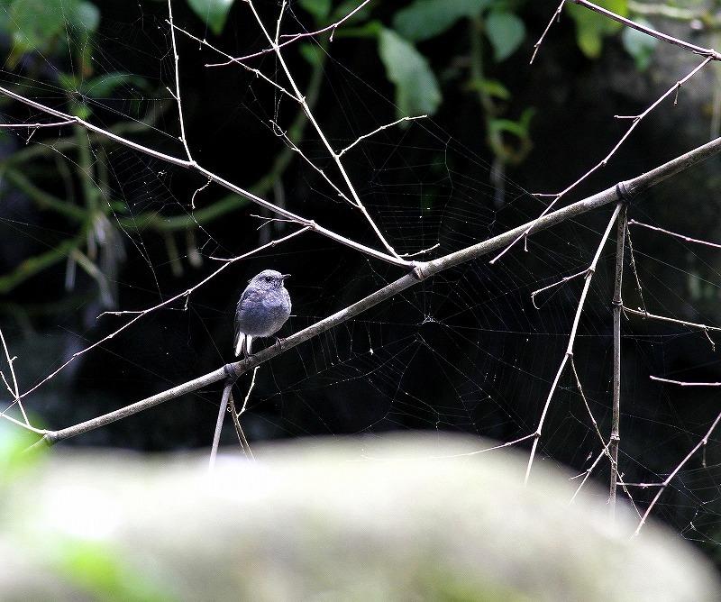 台湾鳥見旅行(その9)・・・_c0213607_19224120.jpg