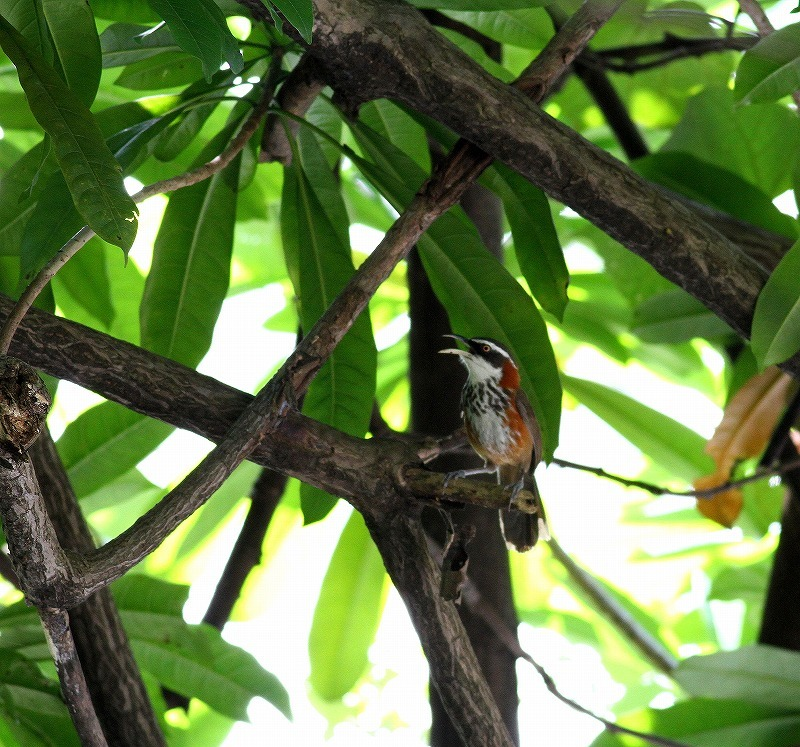 台湾鳥見旅行(その9)・・・_c0213607_19251507.jpg