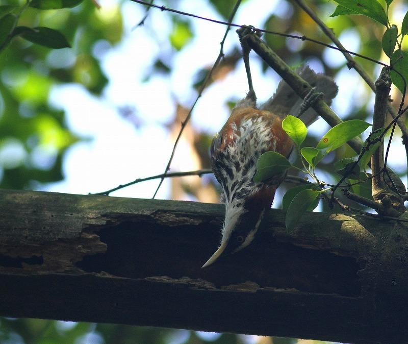 台湾鳥見旅行(その9)・・・_c0213607_19252089.jpg