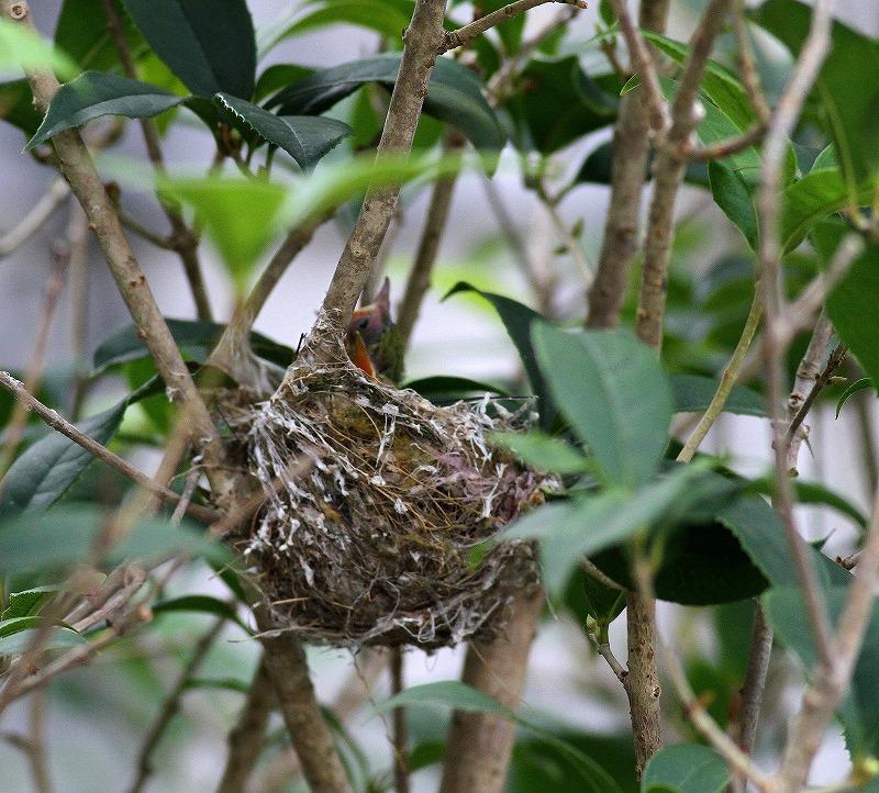 台湾鳥見旅行(その9)・・・_c0213607_19282350.jpg