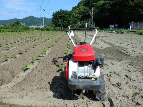 まめつぶ農園2016 Vol.9黒豆が順調に生育中。_b0206037_08225166.jpg