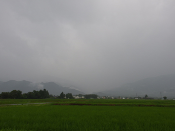 恵雨_a0014840_10442028.jpg