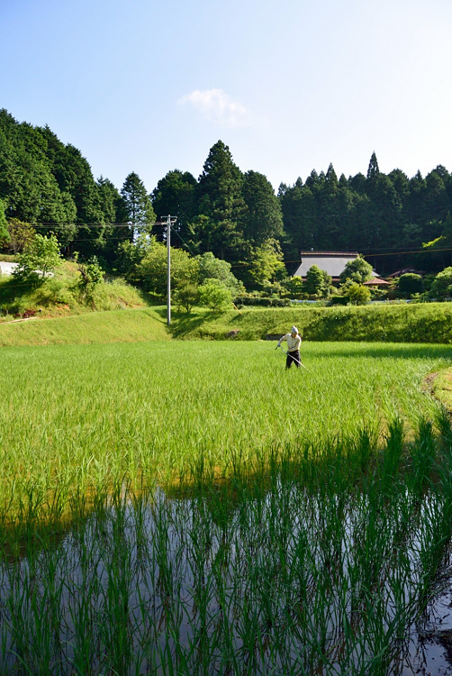 今年の米作り_d0231263_22345265.jpg