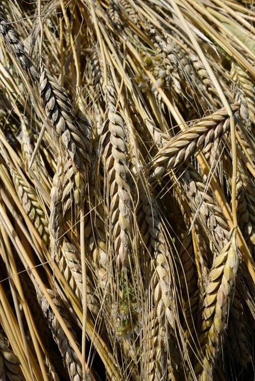 今年の米作り_d0231263_22381921.jpg