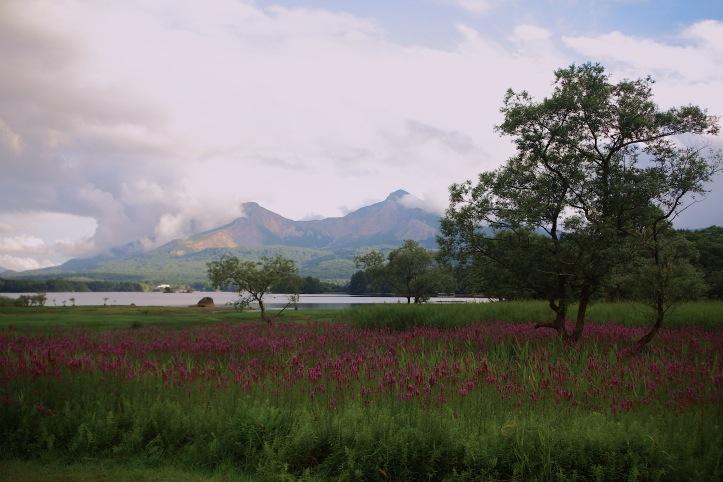 裏磐梯 桧原湖のミソハギ _e0165983_1236469.jpg