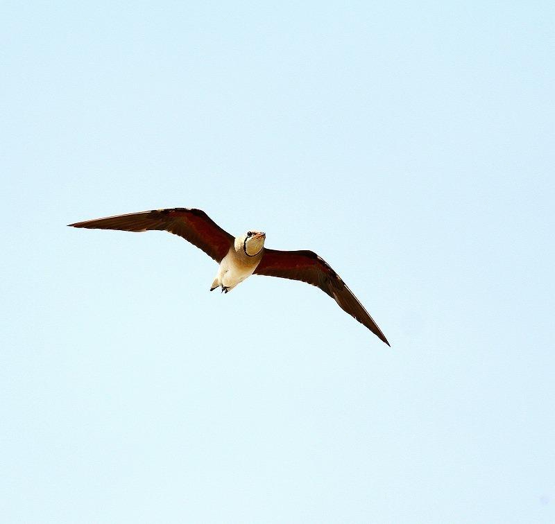 台湾鳥見旅行(その10)・・・_c0213607_21310968.jpg