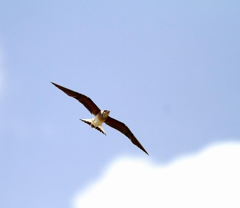 台湾鳥見旅行(その10)・・・_c0213607_21311686.jpg