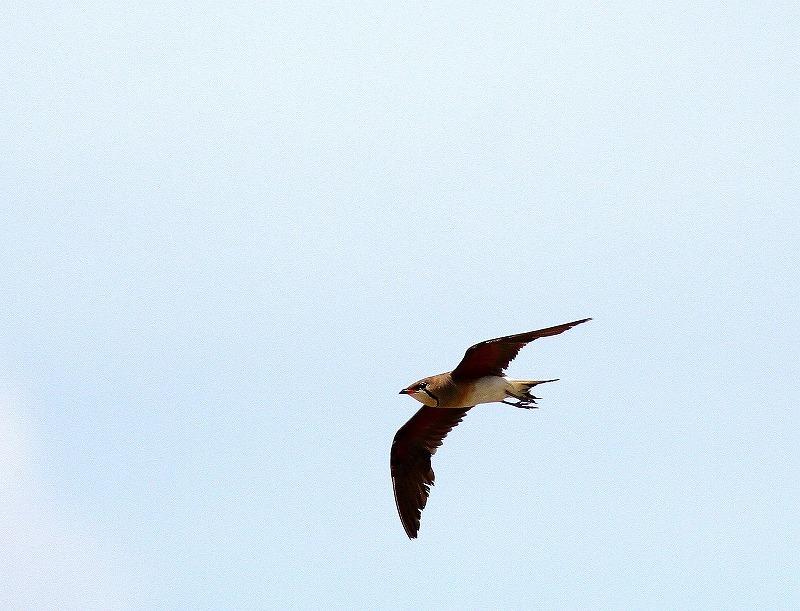 台湾鳥見旅行(その10)・・・_c0213607_21311929.jpg