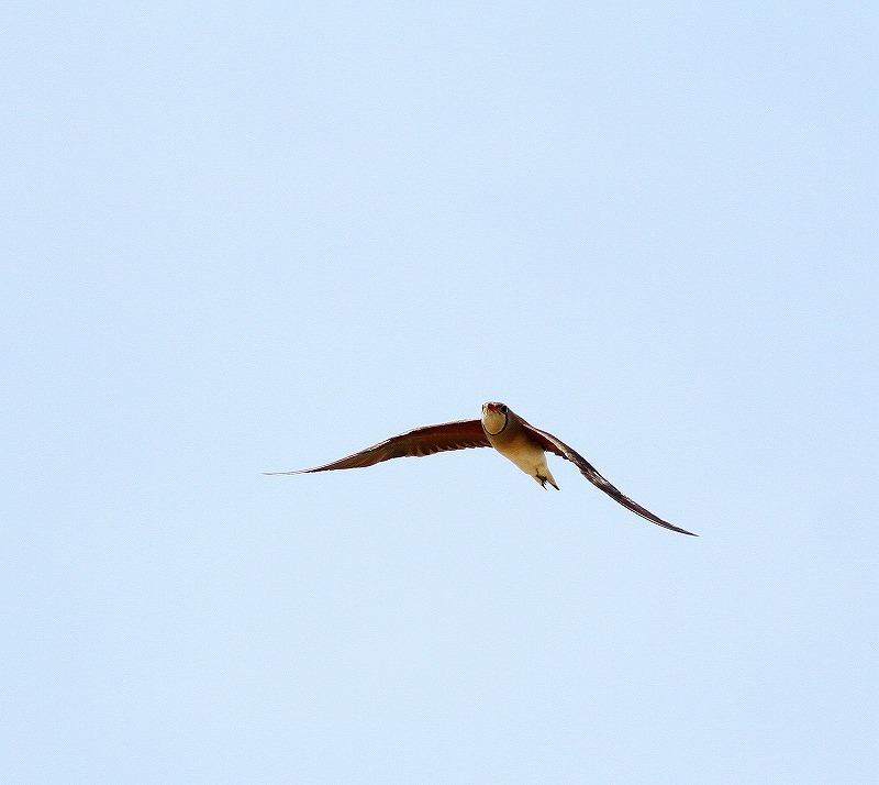 台湾鳥見旅行(その10)・・・_c0213607_21312315.jpg