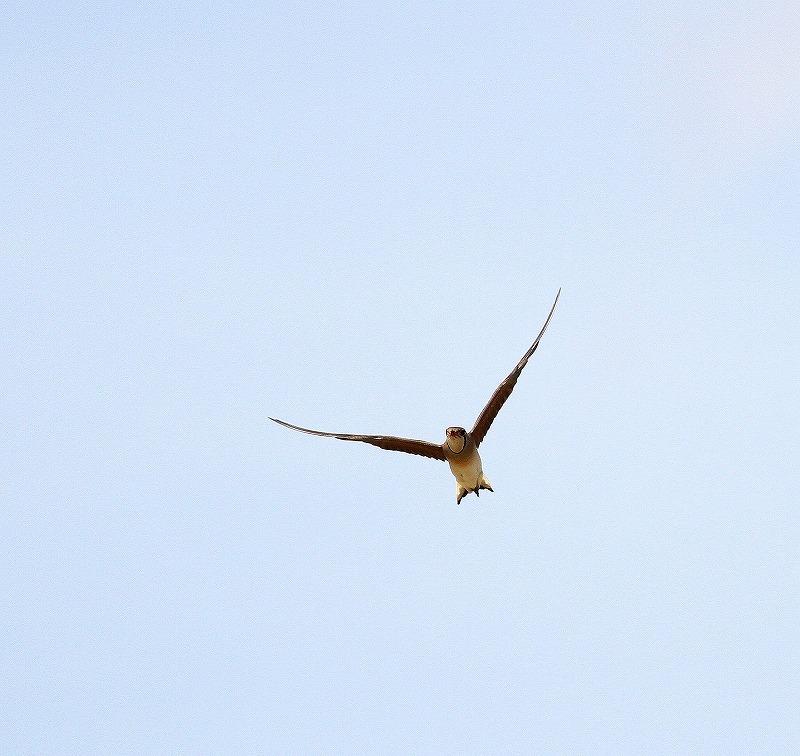 台湾鳥見旅行(その10)・・・_c0213607_21312791.jpg