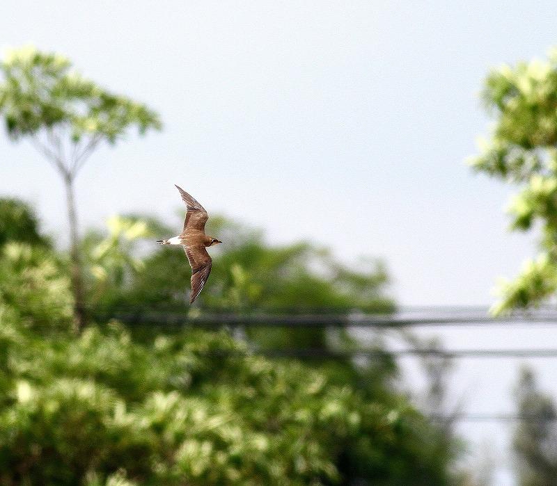 台湾鳥見旅行(その10)・・・_c0213607_21314994.jpg
