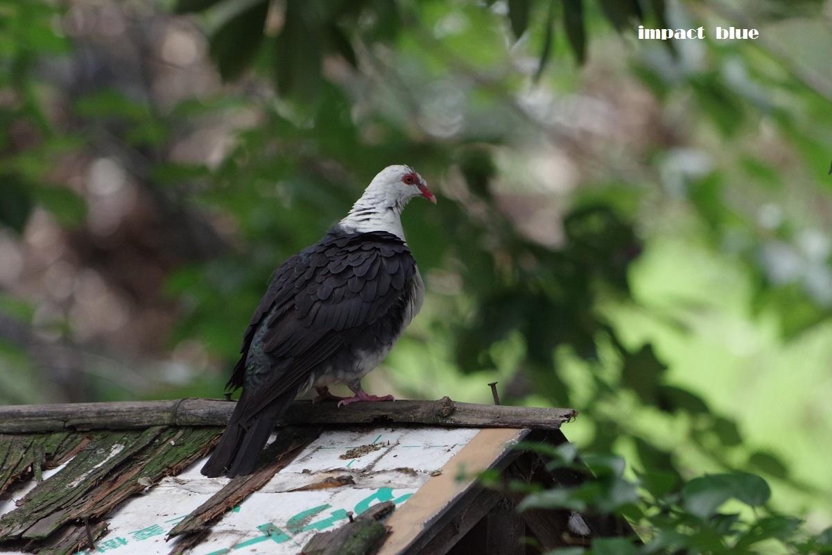 キャンベルタウン・野鳥の森に行ってみた♪_a0355908_19190224.jpg
