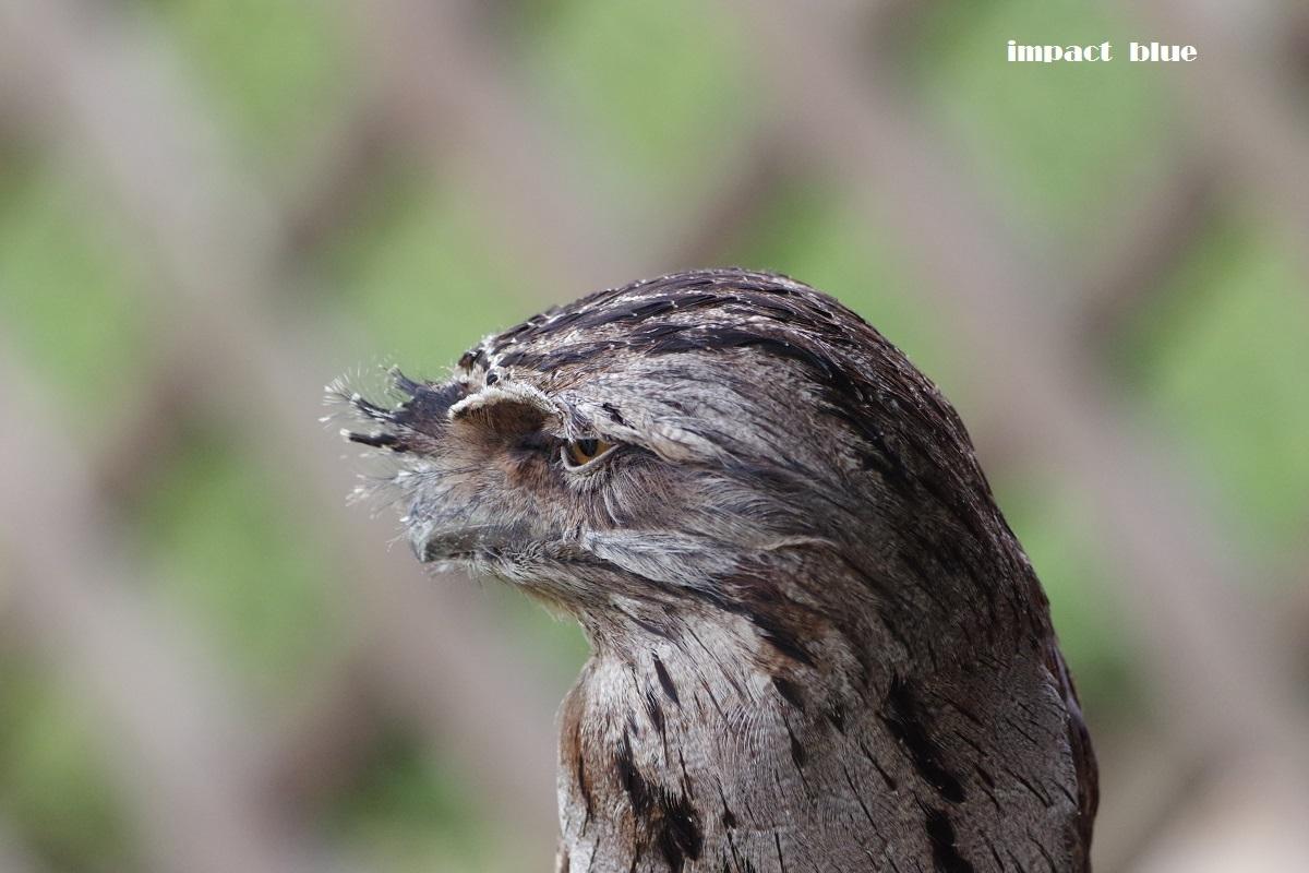 キャンベルタウン・野鳥の森に行ってみた♪_a0355908_19192395.jpg