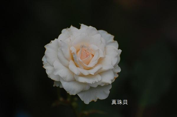 d0030609_22163892.jpg