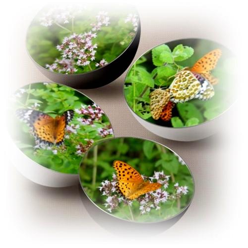 オレガノが好きな蝶々_c0026824_16484325.jpg
