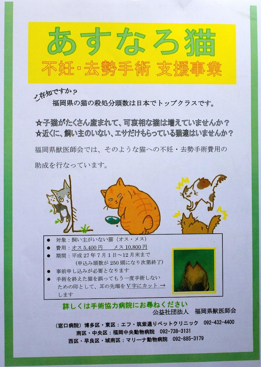 あすなろ猫_d0073743_16381766.jpg
