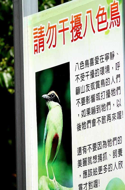 台湾鳥見旅行を終えて・・・_c0213607_19115540.jpg
